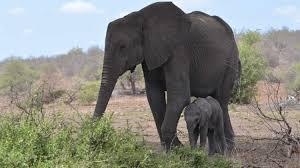 Tembe Elephant Park | Explore.org